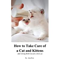 How to Take Care Of A Cat And Kittens After Giving Birth