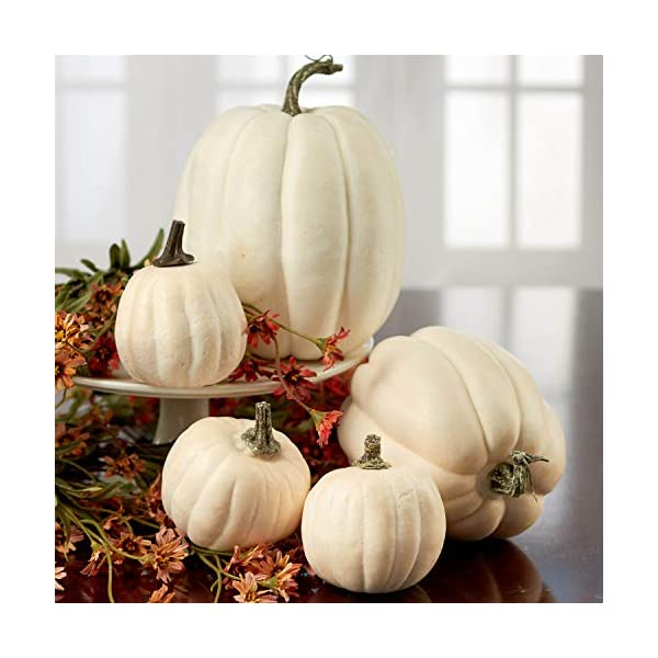 Package of 6 Assorted Artificial Frosted Gourds and Pumpkins